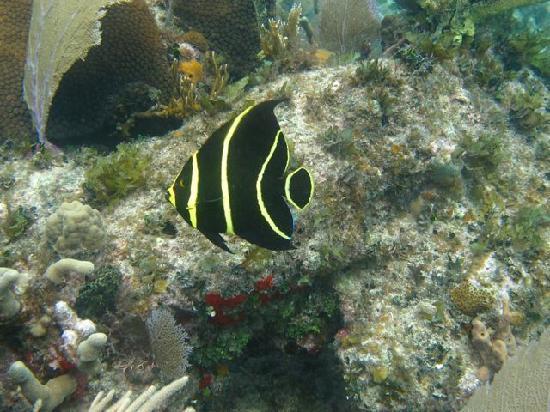 G&G's Clearwater Paradise: An underwater wonderland