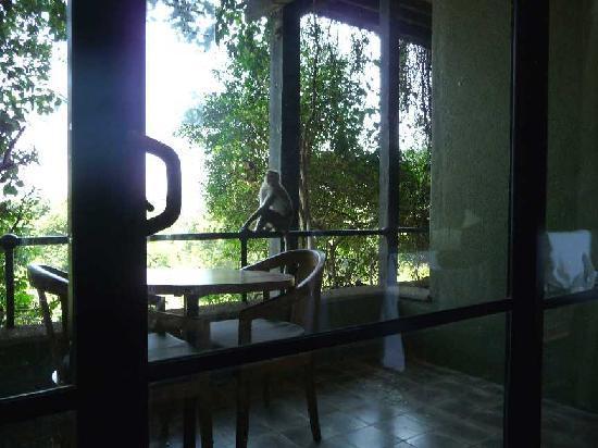 monkey on balcony