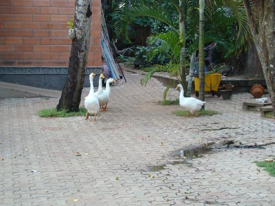 Pagoda Resorts Alleppey: Ducks