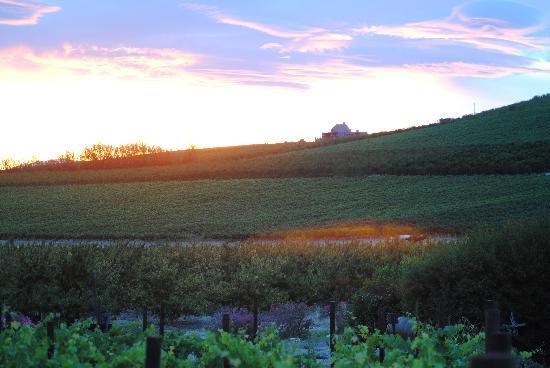 Lovely sunset over the vineyards
