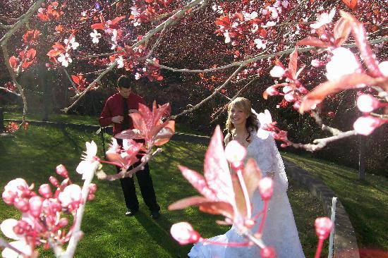 The happy bride in the cherry blossoms