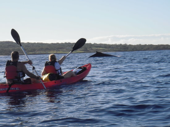 Kelii's Kayak Tours