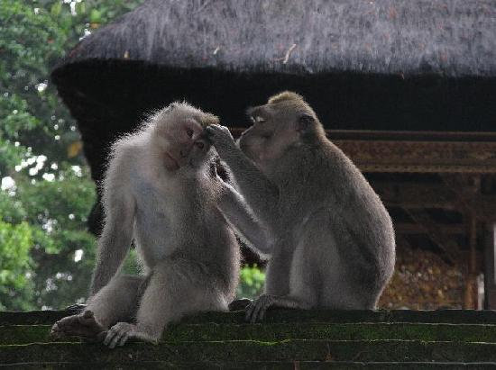 Monkey Forest Couple