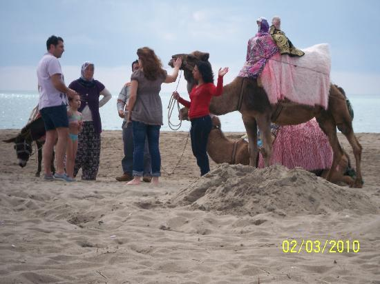 Camel Visit on the Beach