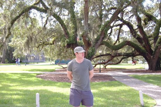 Oak trees dripping with Spanish moss on hotel grounds