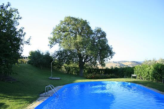The nice pool in the soft meadow