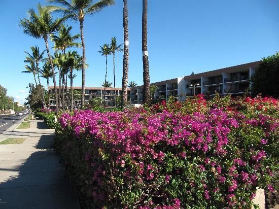 Maui Parkshore: ouside