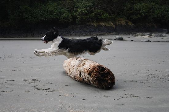 Pacific Sands Beach Resort: Tucker Enjoying Cox Bay!