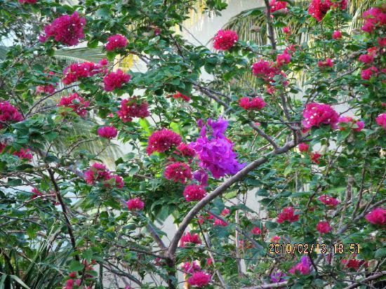 Iberostar Paraiso Lindo: gardeners paradise