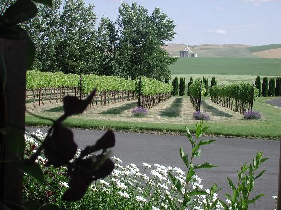 Walla Faces Inns at the Vineyard: Sitting on the porch at Mt. West Suite