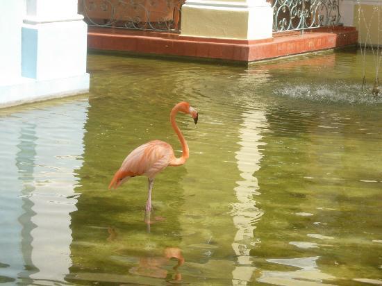 Iberostar Hacienda Dominicus: JARDIN