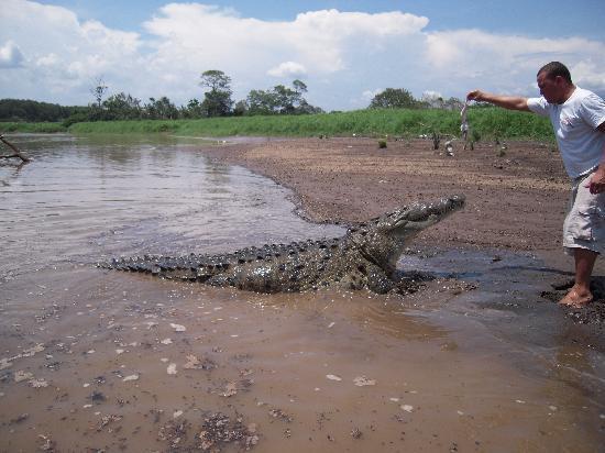 جاكو, كوستاريكا: Crocodile Tours