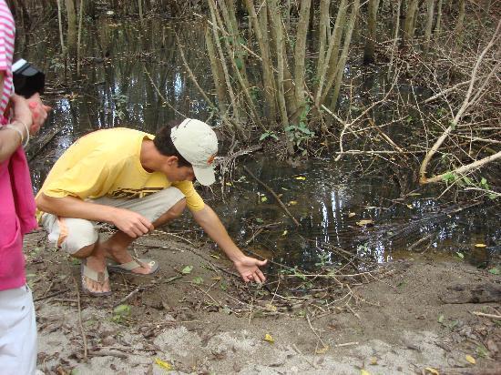 Banderas Bay Hover Tours: Mangrove hike