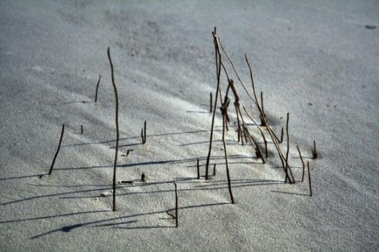 Beaufort, SC: Beach Grass - I'm always looking for a new beach to photograph... not a touristy beach... Huntin