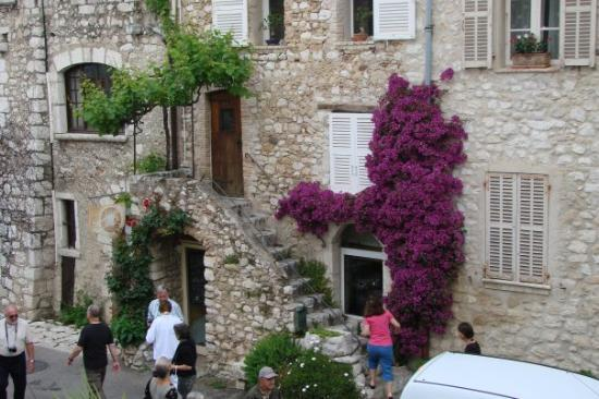St-Paul-de-Vence, França: Flowers abound in the costal region of Cannes. France.  Jasmine and roses are grown for perfume