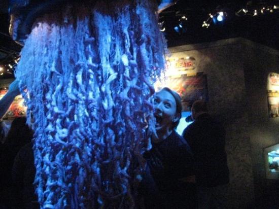 Ripley's Aquarium of the Smokies: jellyfish!!!!!