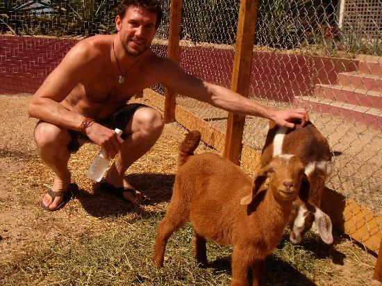 The Hotelito: the lovely goats: mini and mimi