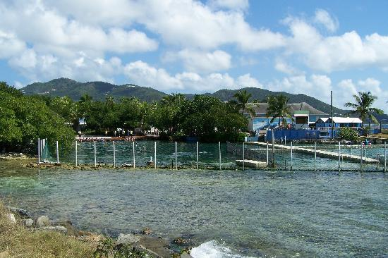 Dolphin Discovery Tortola: SWIM WITH DOLPHINS HERE
