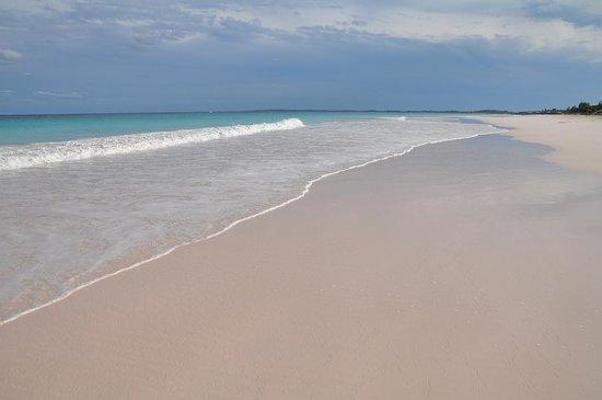 Pink Sands Beach : Pink Sand Beach 01