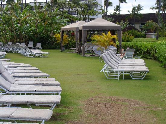 Sheraton Maui Resort & Spa: Grassy area mentioned in my review