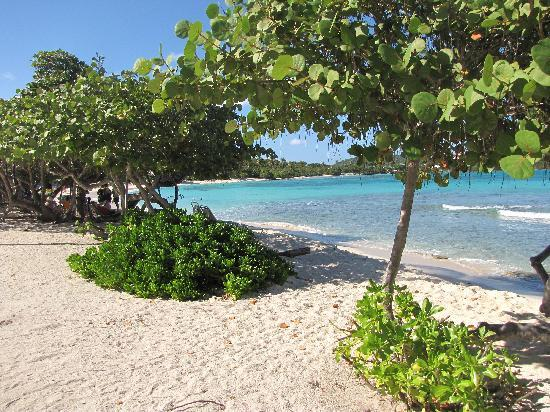 Antilles At Sapphire Beach Resort: the beach at Sapphire Beach resort