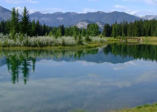 Banff National Park, Canada: Banff Nat'l Park, Alberta; picnic area outside Banff townsite