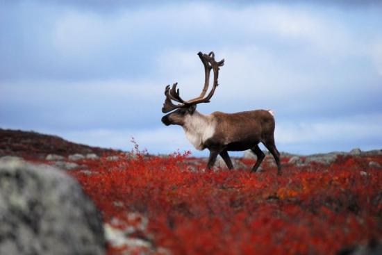 Foto de Yellowknife
