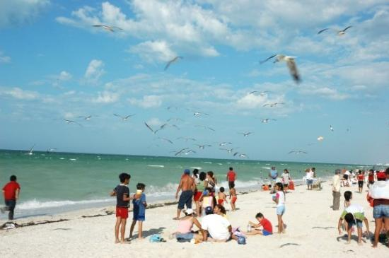 Merida, Mexico: Beach front at Progreso. The sand is all crushed sea shells.