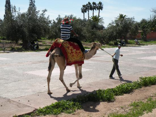 Marrakech - Menara gardens