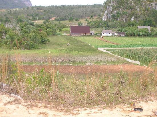 Casa Particular Lazaro y Neri: Alentours de Vinales