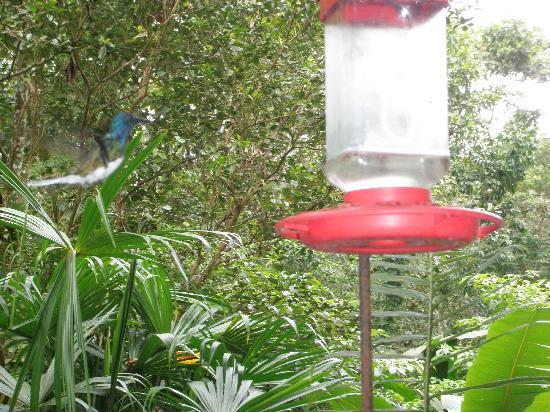 Tree Houses Hotel Costa Rica : one of the humming birds