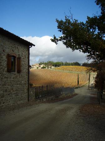 Tuscan Wine Tours by Grape Tours: side road to one of the vineyards