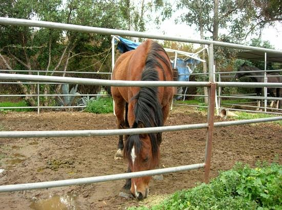 Foot Path Winery: Wine with equine