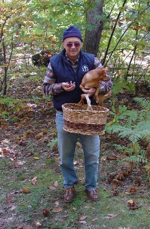 Vicchio, อิตาลี: la raccolta dei marroni nel bosco