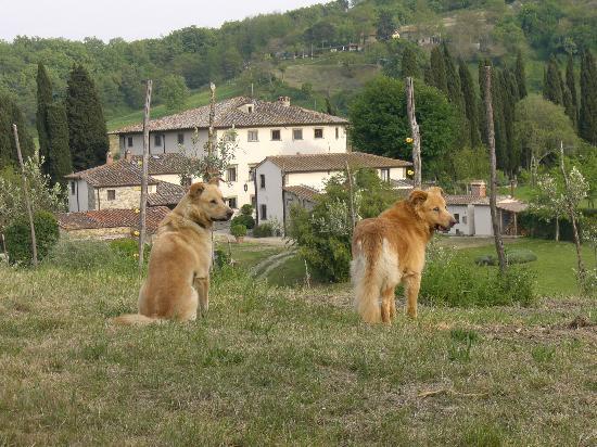 Villa Campestri Olive Oil Resort: vita da...cani