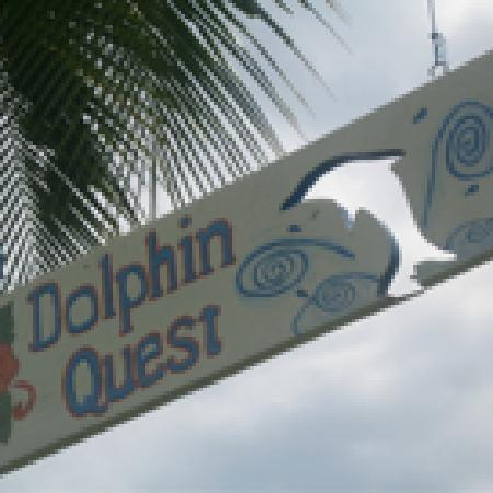 Dolphin Quest : What a sign...