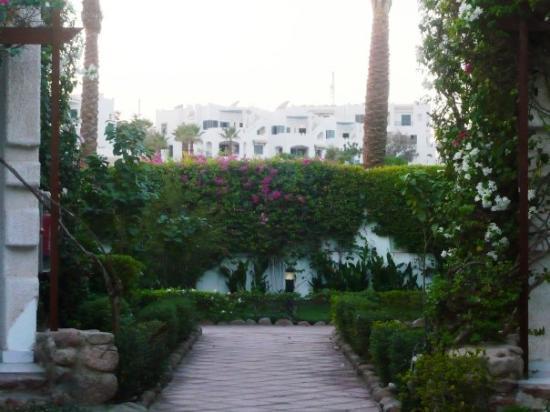 Bilde fra Fayrouz Resort Sharm El Sheikh