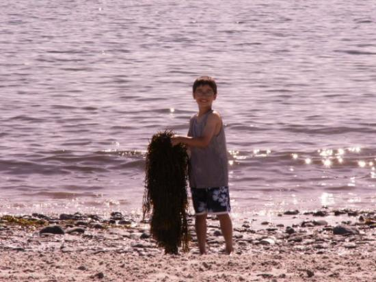 Damariscotta, เมน: Justin enjoying Pemaquid beach