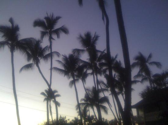 Kailua-Kona, HI: IMG_0170