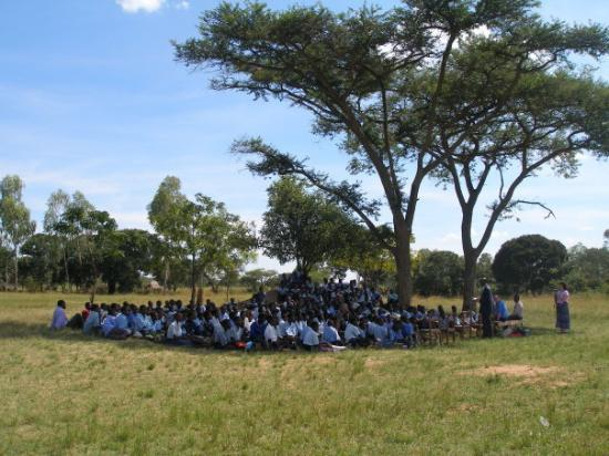 Harare, Zimbábue: Igana School assembly under Umbrella Thorn Acacia trees.