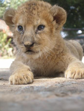 Harare, Zimbabwe: Sooooo cute, full grown now!
