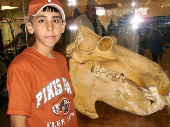 Cheyenne Mountain Zoo: Xavier looking at a hippo skull