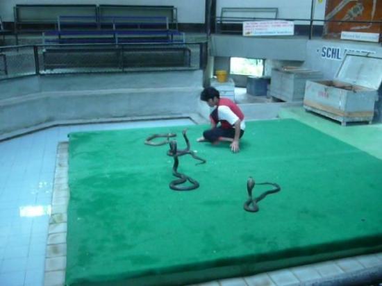 Samui Snake Farm Photo