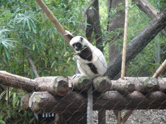 Houston Zoo: Zoboomafoo!!!