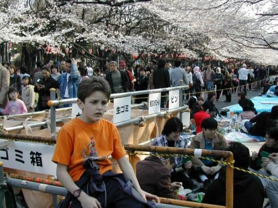 Ueno Park: Cherry blossom celebration.  Mike looks happy...