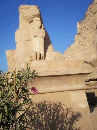 Karnak-tempelet: Luxor - Sphinx up close