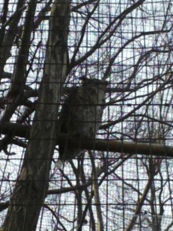 Bilde fra Greenville Zoo