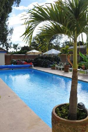 La Paloma Bed and Breakfast: Courtyard Pool