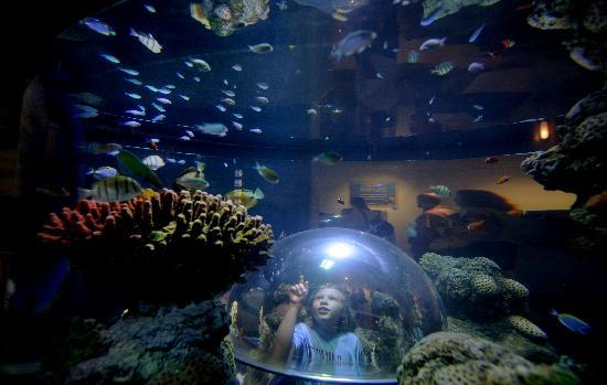 Sea Life Aquarium Carlsbad Ca Top Tips Before You Go