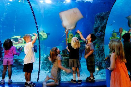 Sea Life Aquarium Carlsbad Lo Que Se Debe Saber Antes